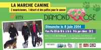 La marche canine Diamond Rose